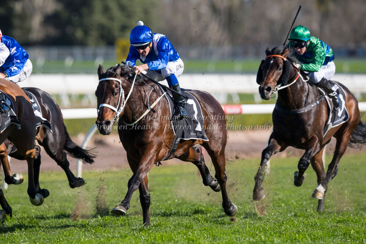 WINX is the clear favourite, but will someone steal the thunder?