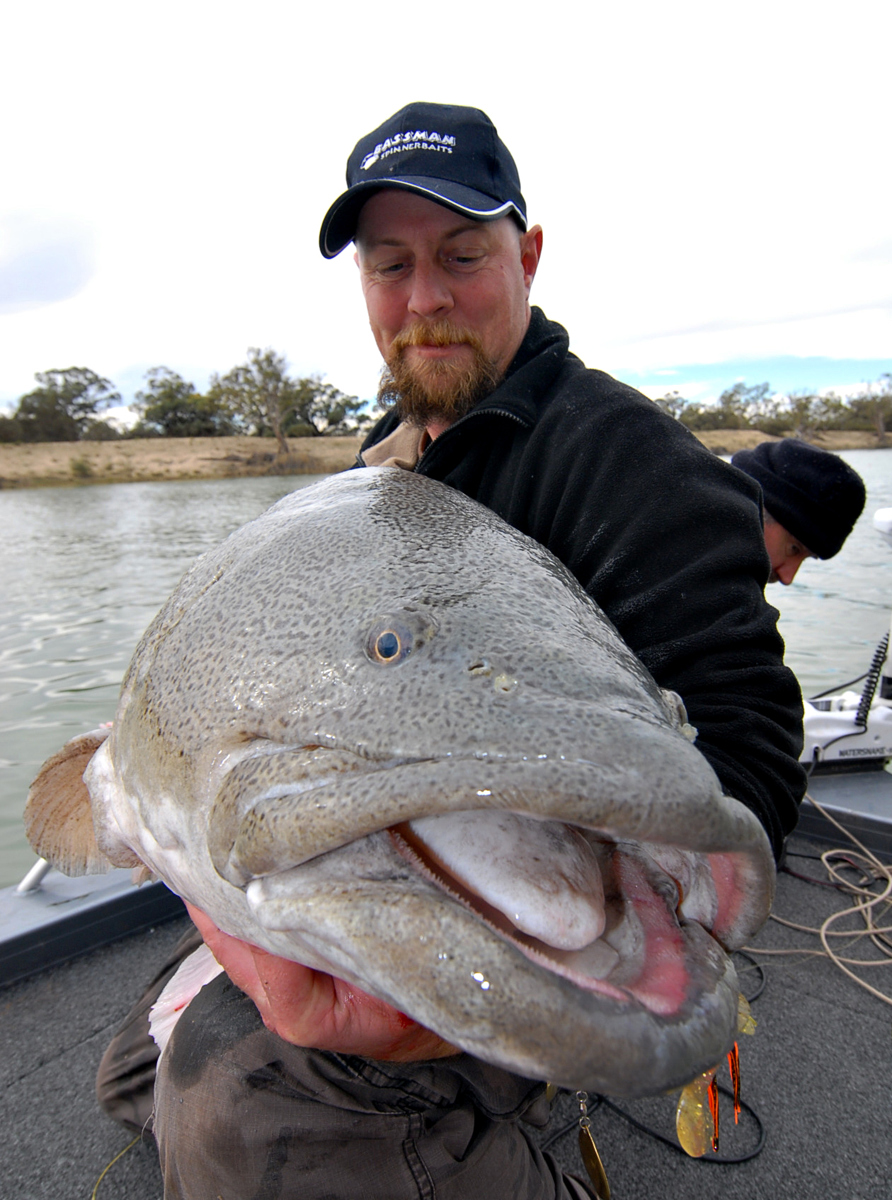 Showing off the oversize lips and enormous mouth of a big Murray cod.