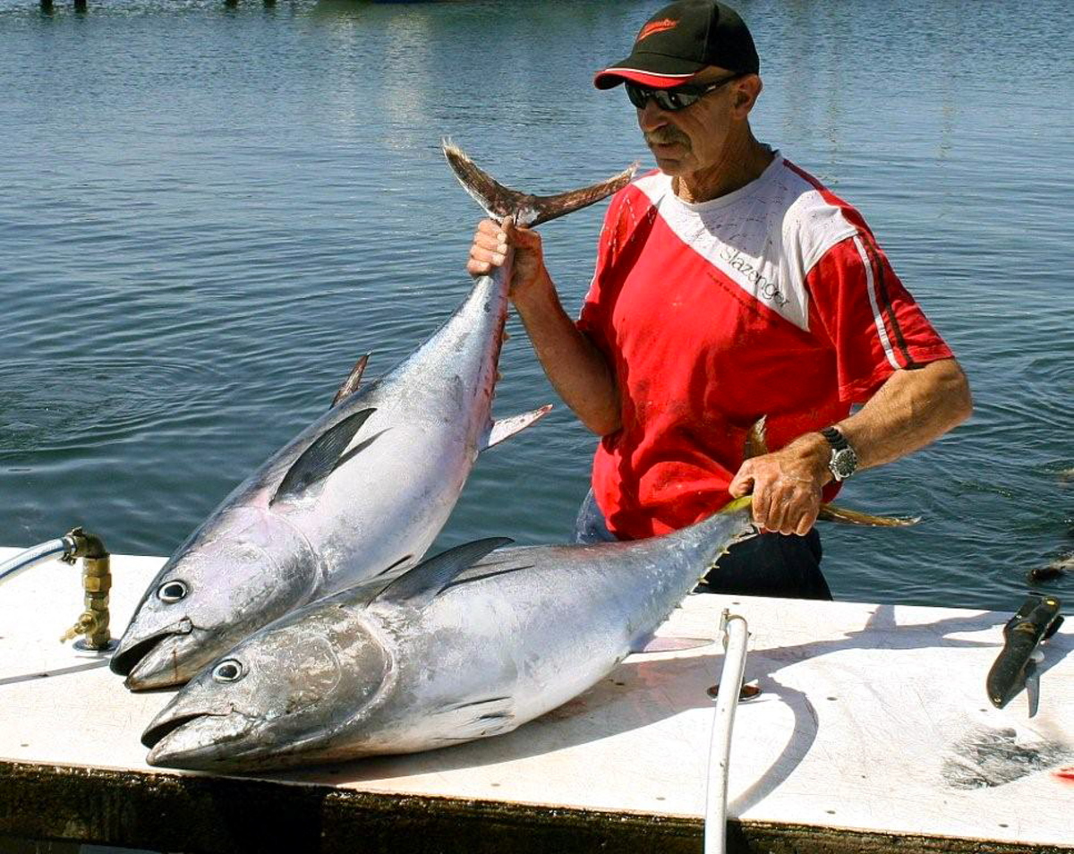 Bob McPherson with a handy pair of bluefin on the cleaning table at Portland.