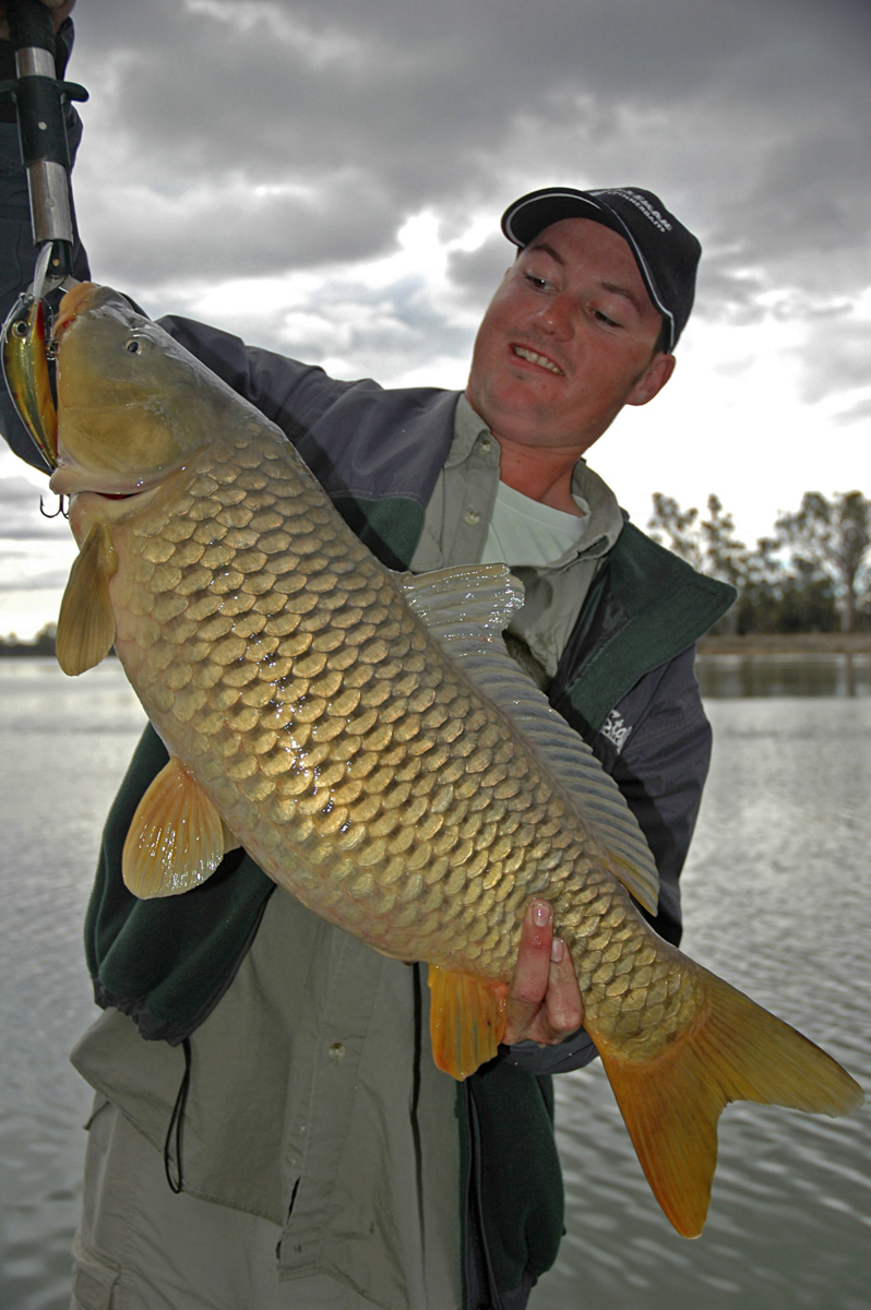 A 7kg carp caught in the Murray River.