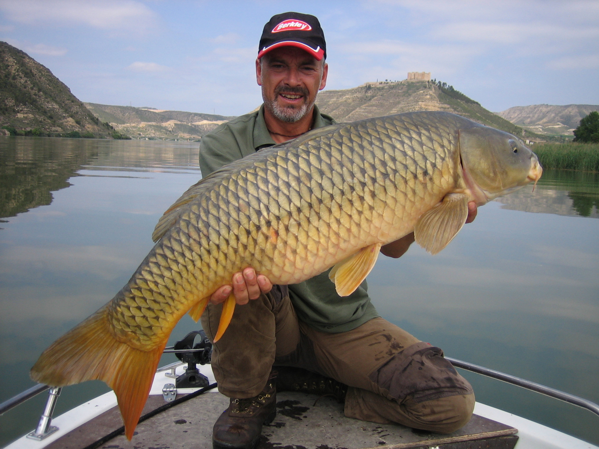 Fishing guide Gary Allen shows off a 15kg carp caught in the Segre River in northeast Spain. European anglers pay big dollars to go carp fishing