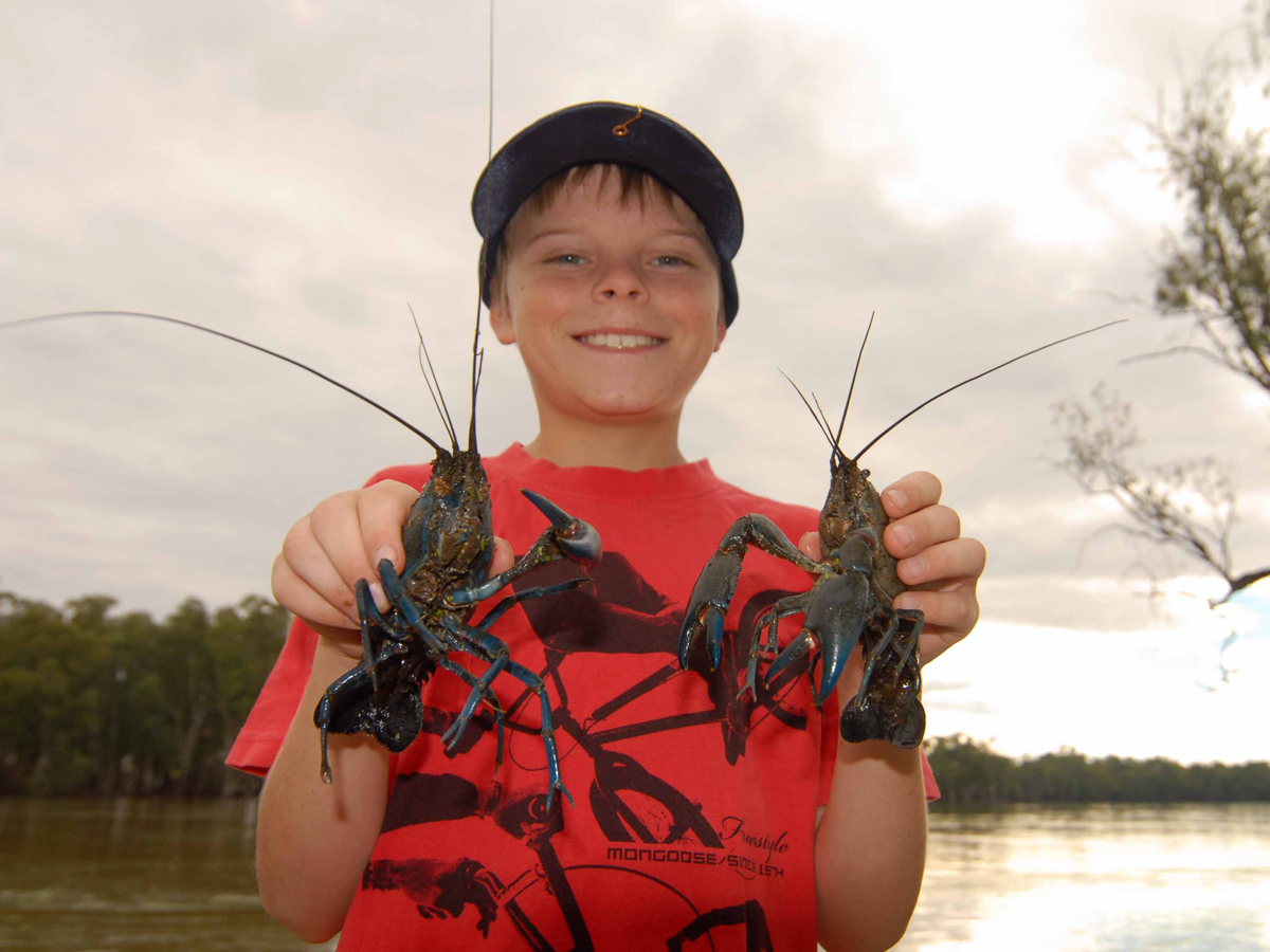 The only problem anglers face with yabbies is whether to put them on the hook or in the pot.