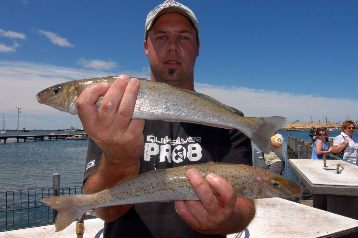 Alan Rowles with a nice pair of big whiting caught at Portland.