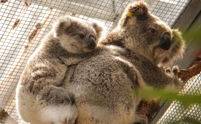 Twilight At Taronga Pledge Proceeds From The Summer Concert Series To Wildlife Crisis Appeal