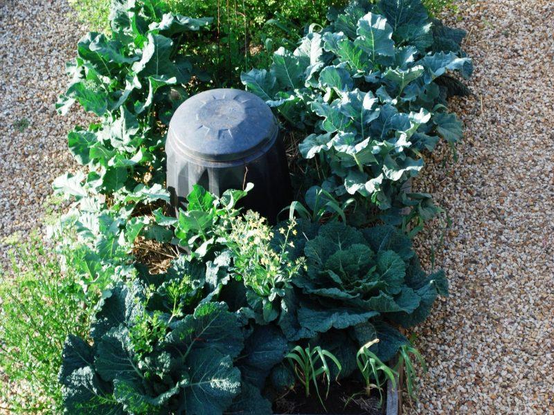 compost-vege.jpg#asset:2151:large