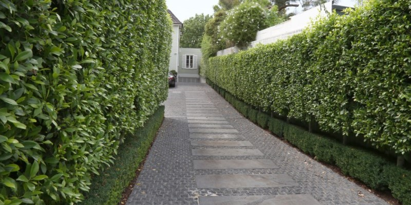 hedges.jpg#asset:1956