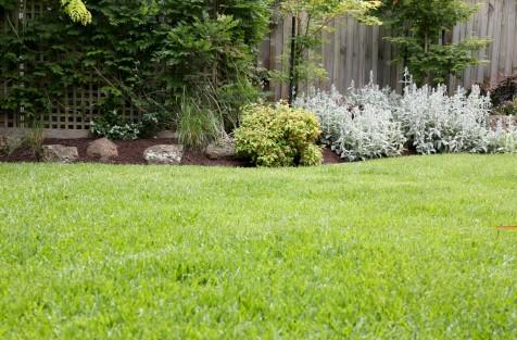 spring-lawn.jpg#asset:1985