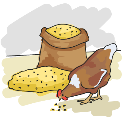Illustration of a hen pecking some feed