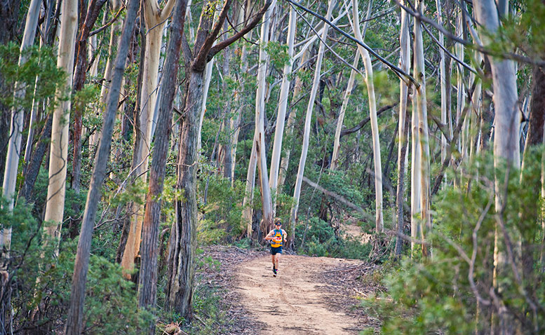 The North Face 100, Blue Mountains Photo By Lyndon Marceau