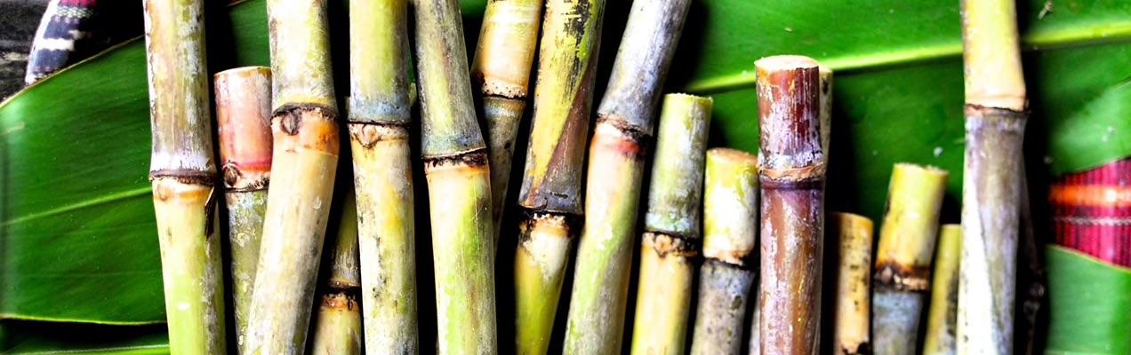 Organic Sugar Cane