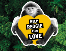 Help Find Reggie Love