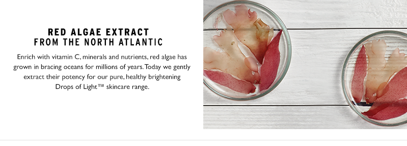 Red algae extract