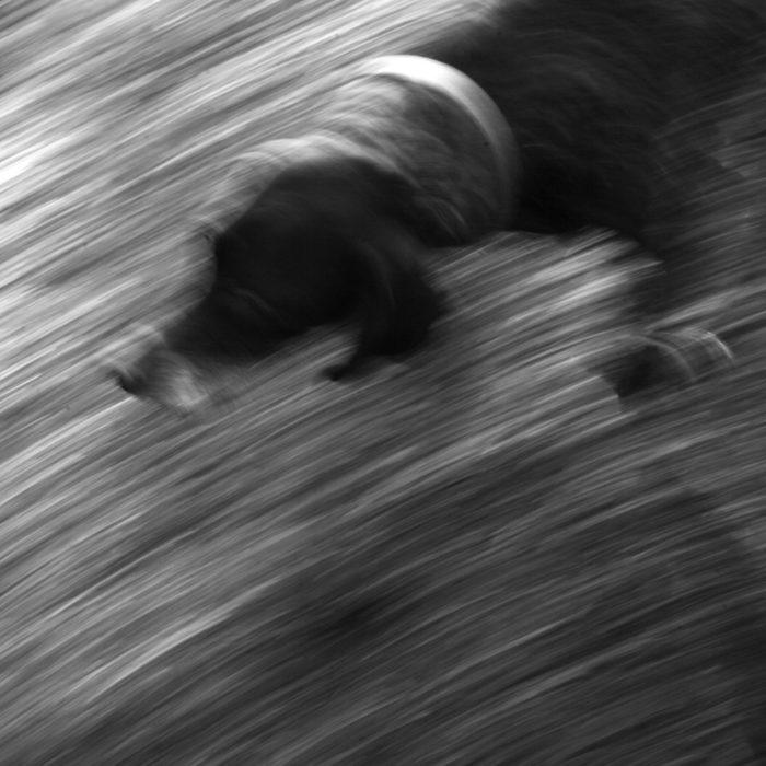 Dog Blur Flickr