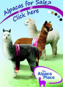Alpacas for Sale Final