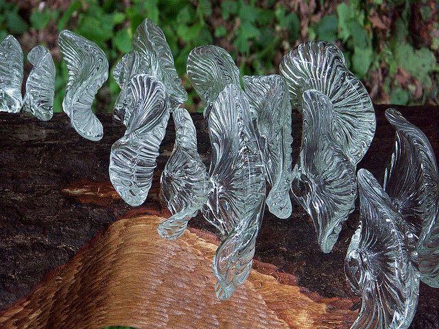 The Magic Of Adaptogenic Mushrooms