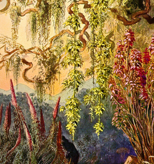 Chromolithograph by w. koehler  after ernst haeckel%e2%80%99s 1882 painting of nillu bushes and hanging bamboo in the highlands of sri lanka  printed in haeckel%e2%80%99s wanderbilder %281905%29