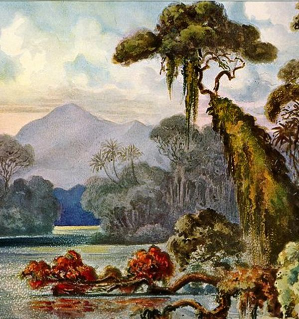 Haeckel ceylon jungle river