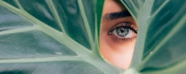 Woman's eye through green leaves photo by drew graham on unsplash