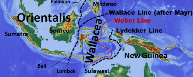 Wallace line