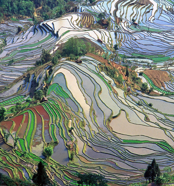 Terrace field yunnan province china wikimedia commons