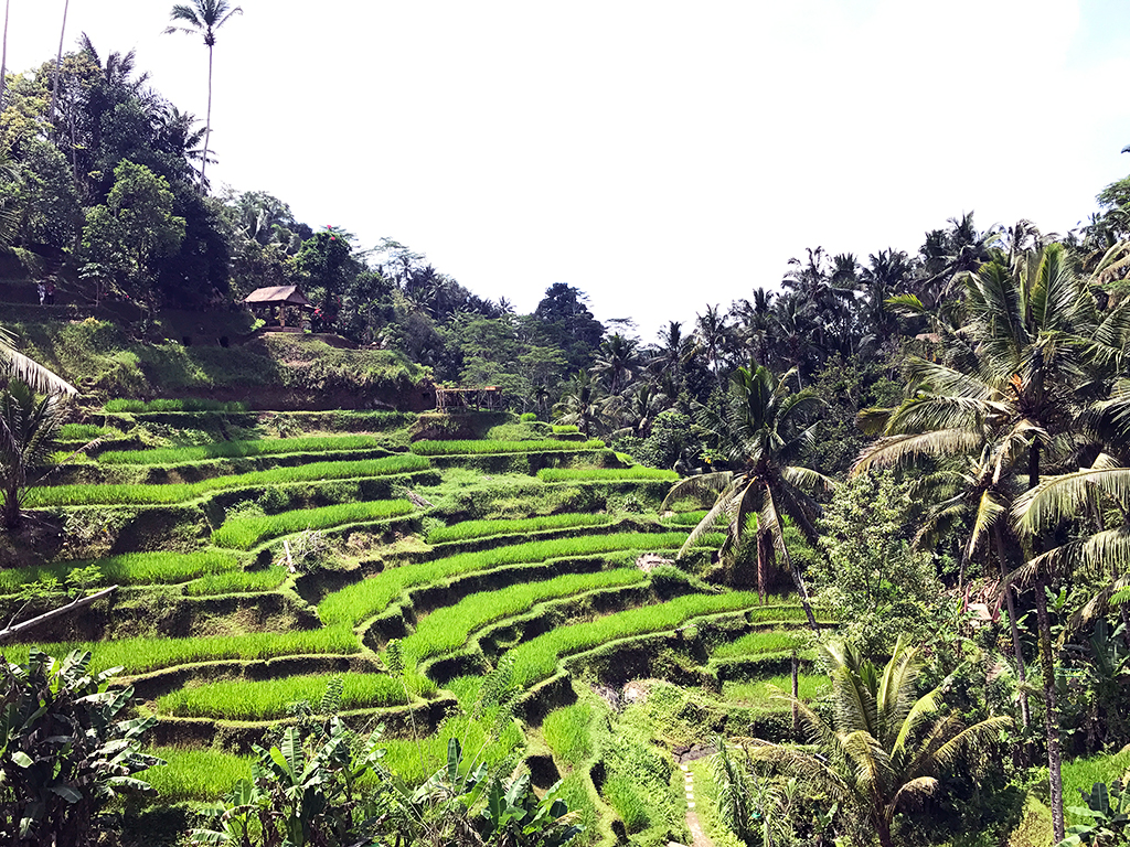Views of the rice terraces