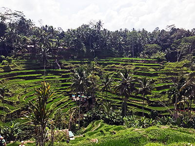 7 Things to do in Ubud