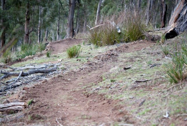 new single track built for the race