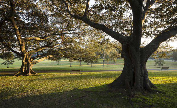 trees_620x380-1