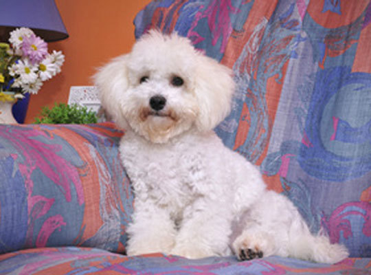 Pampered pet stays
