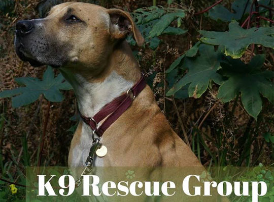 K9 rescue group