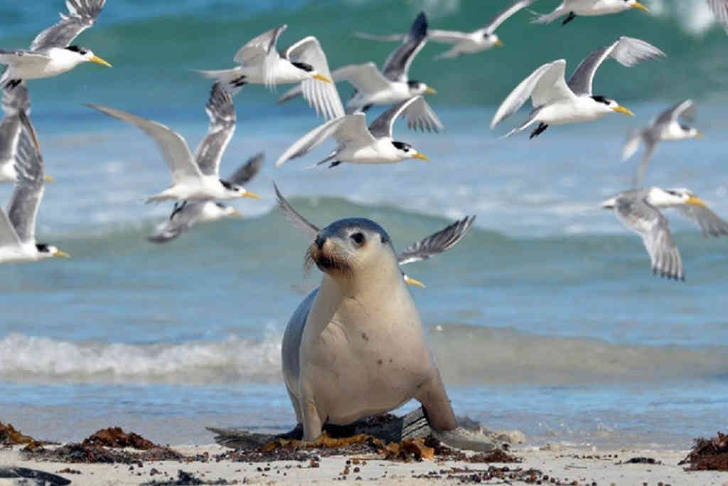 Seal Bay 1200X629