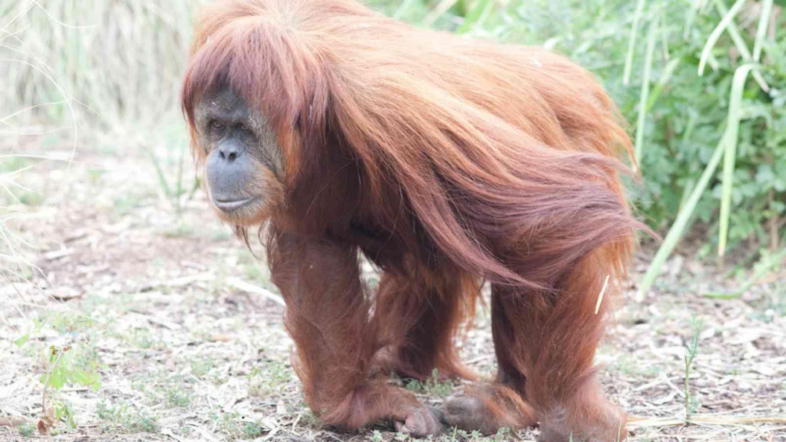 Meet The Primates