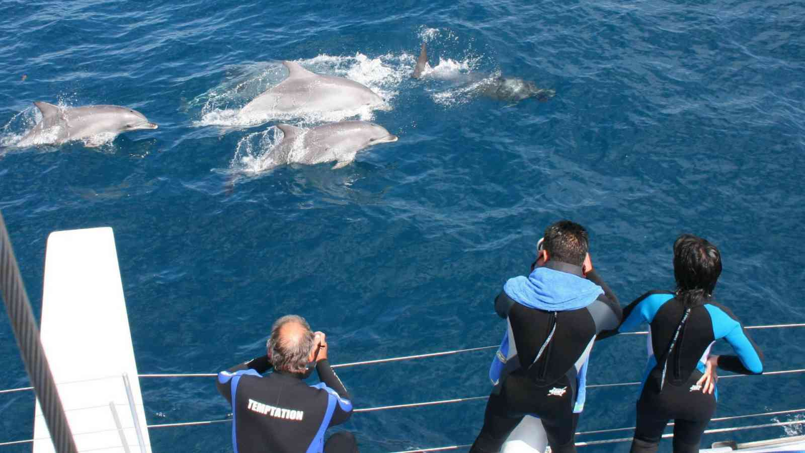 Temptation Dolphins