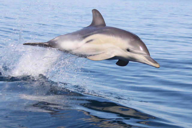 Temptation Sailing Dolphin Swim