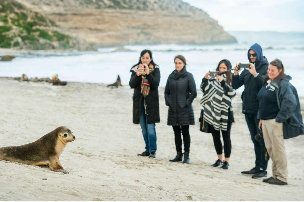 Kangaroo Island Seal Bay Tour