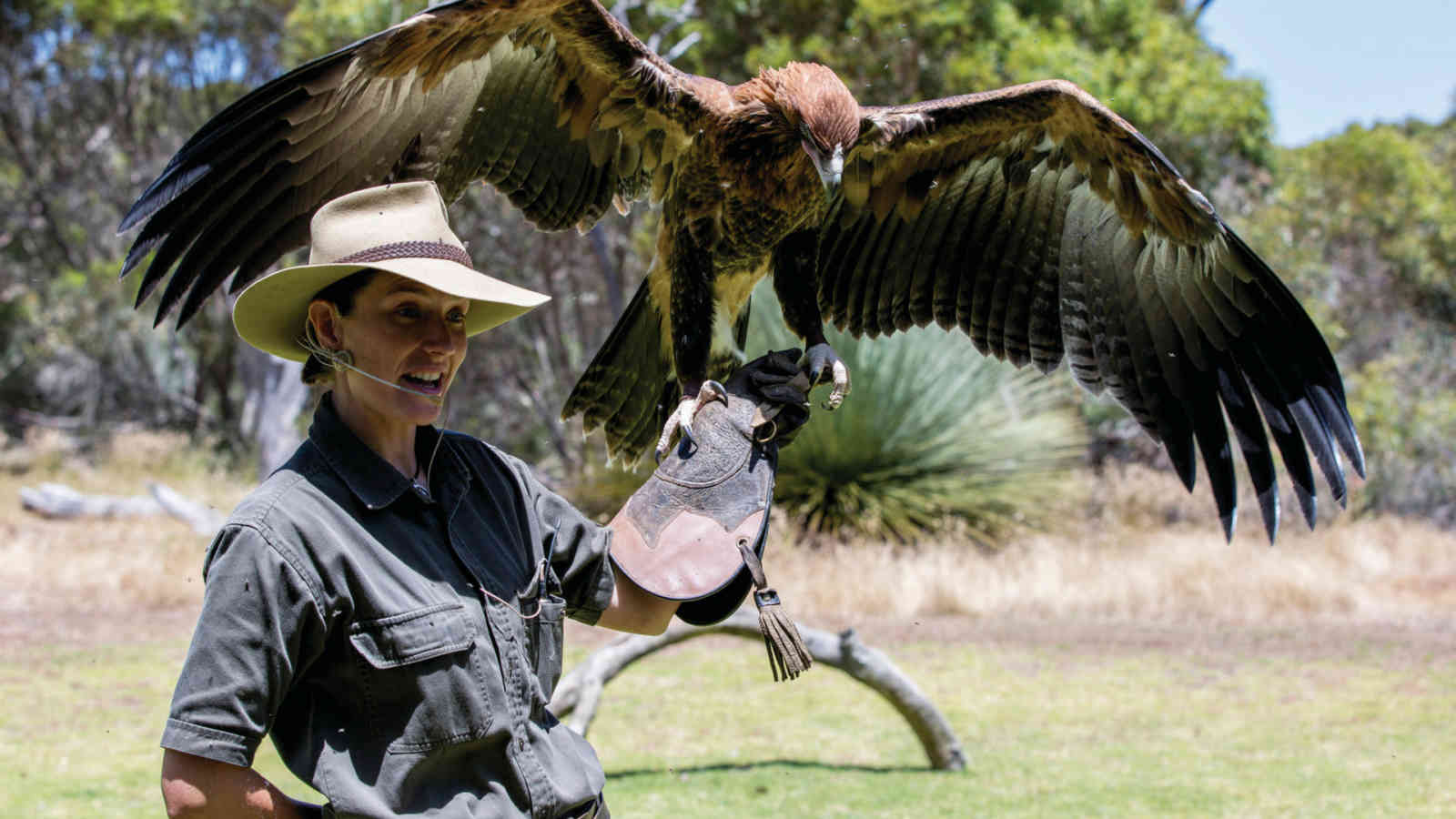 Kangaroo Island Raptor Domain Eagle