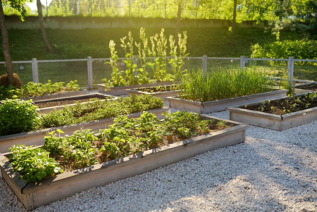 Compost options near you