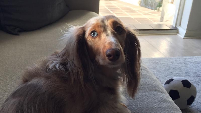 pet Heidi