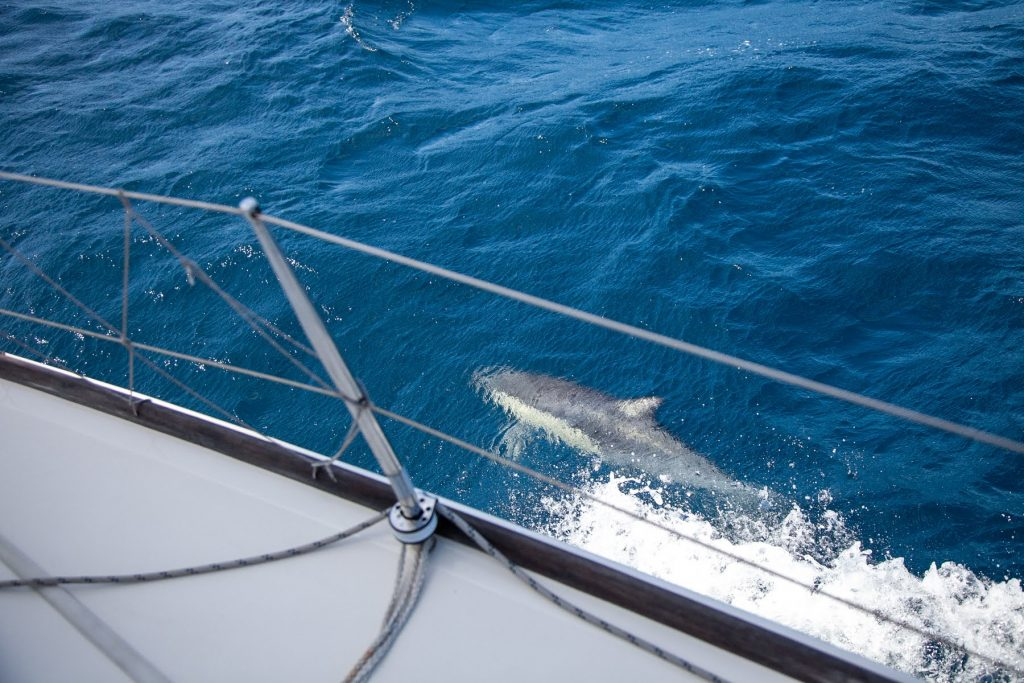 dolphins while sailing mystic II