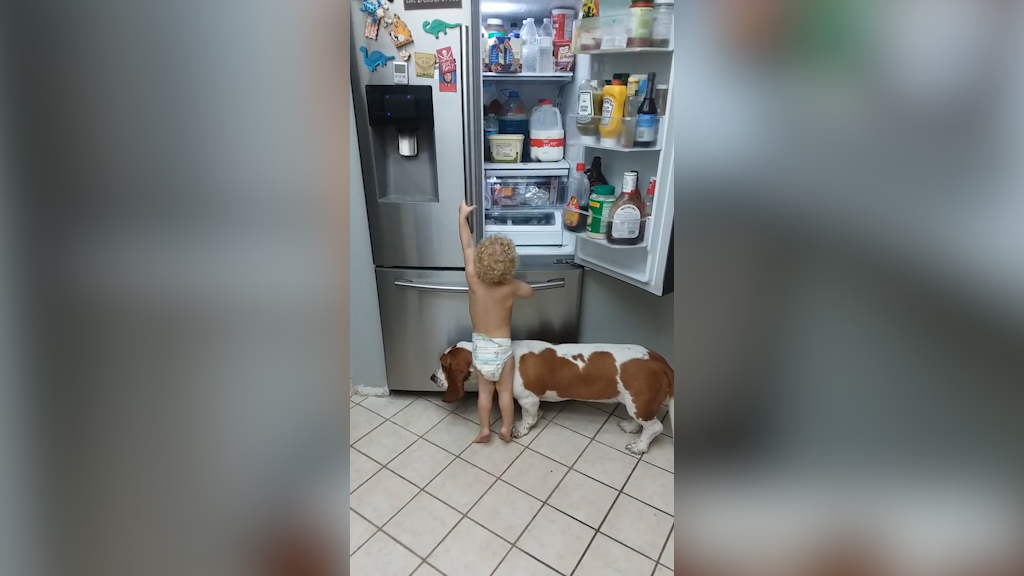 Toddler and pet dog team up to raid fridge
