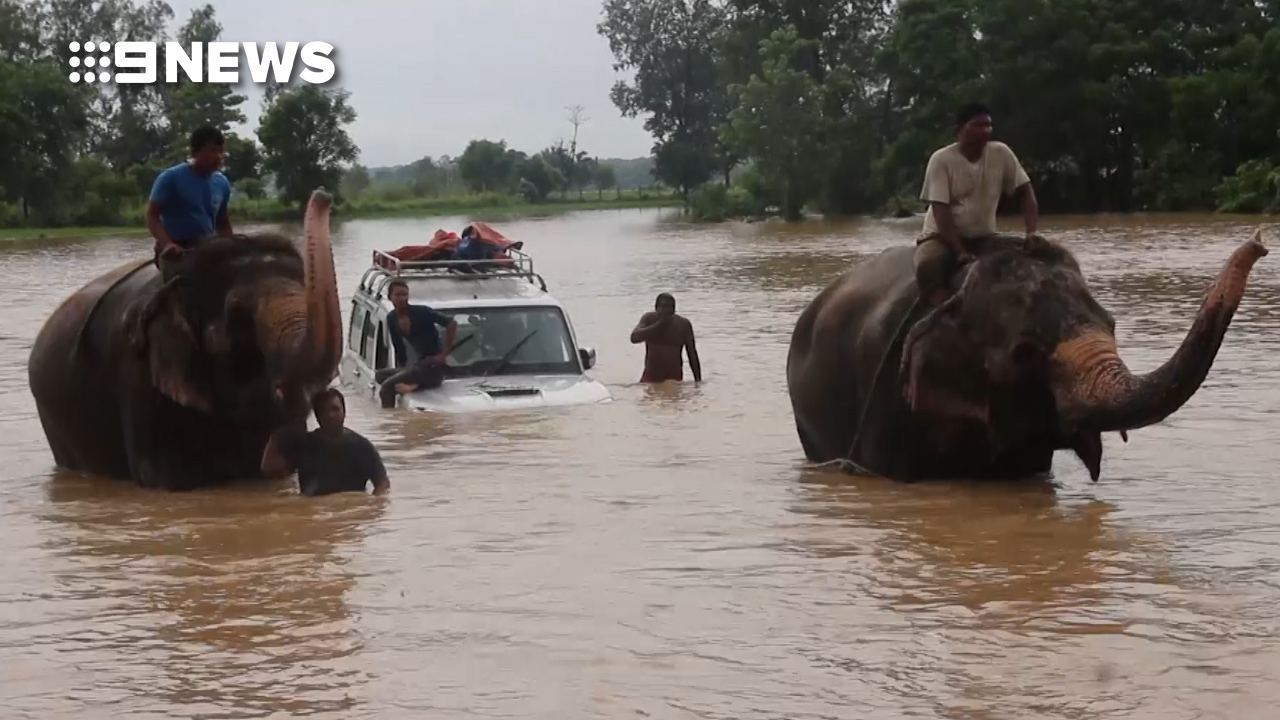 Elephants help tourists in Nepal escape flooding