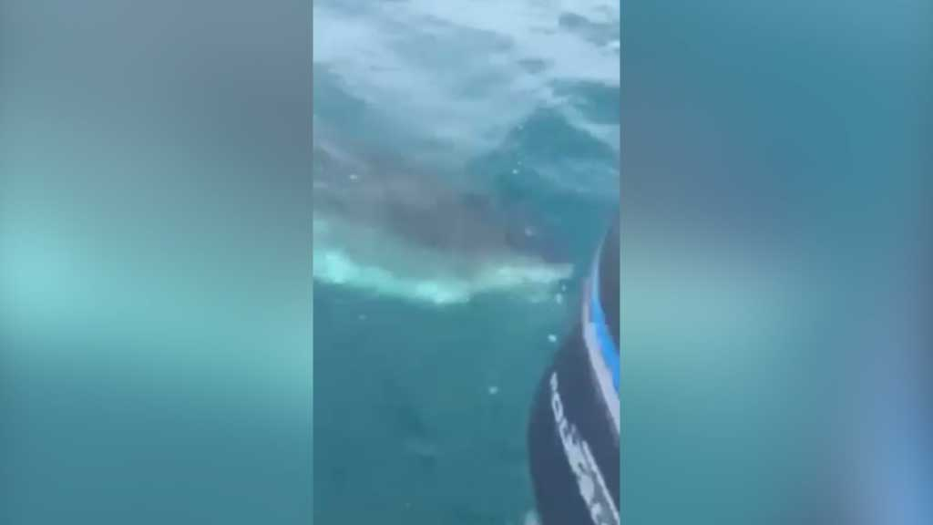 Perth anglers encounter great white