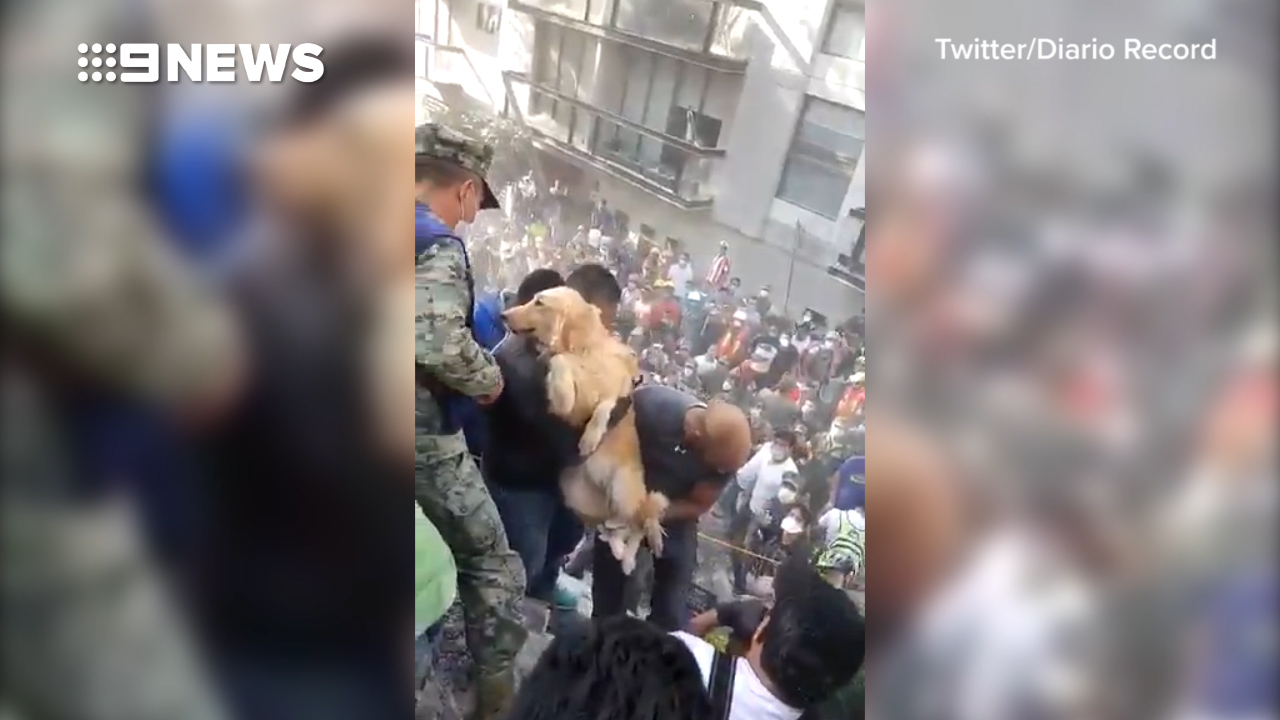 Dog pulled from rubble after Earthquake strikes Mexico