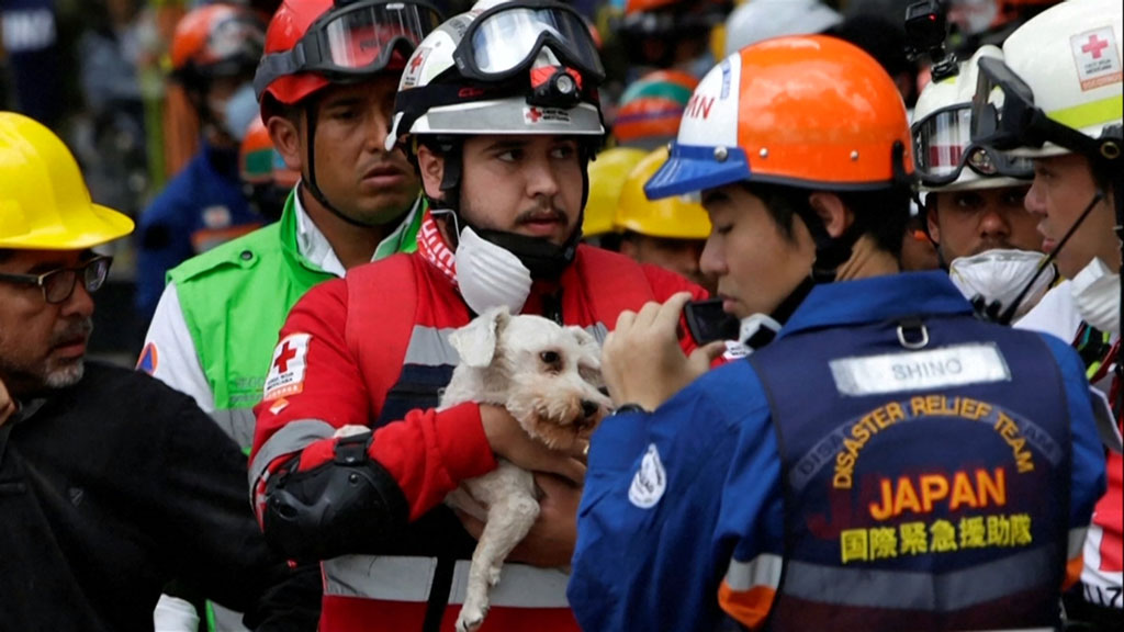 Dog rescued six days after Mexico City earthquake
