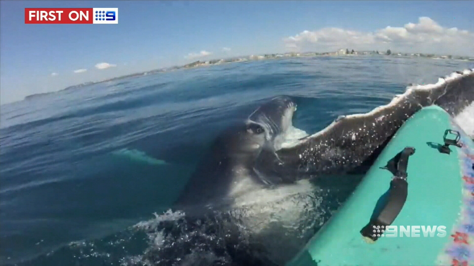 Face to face with a whale
