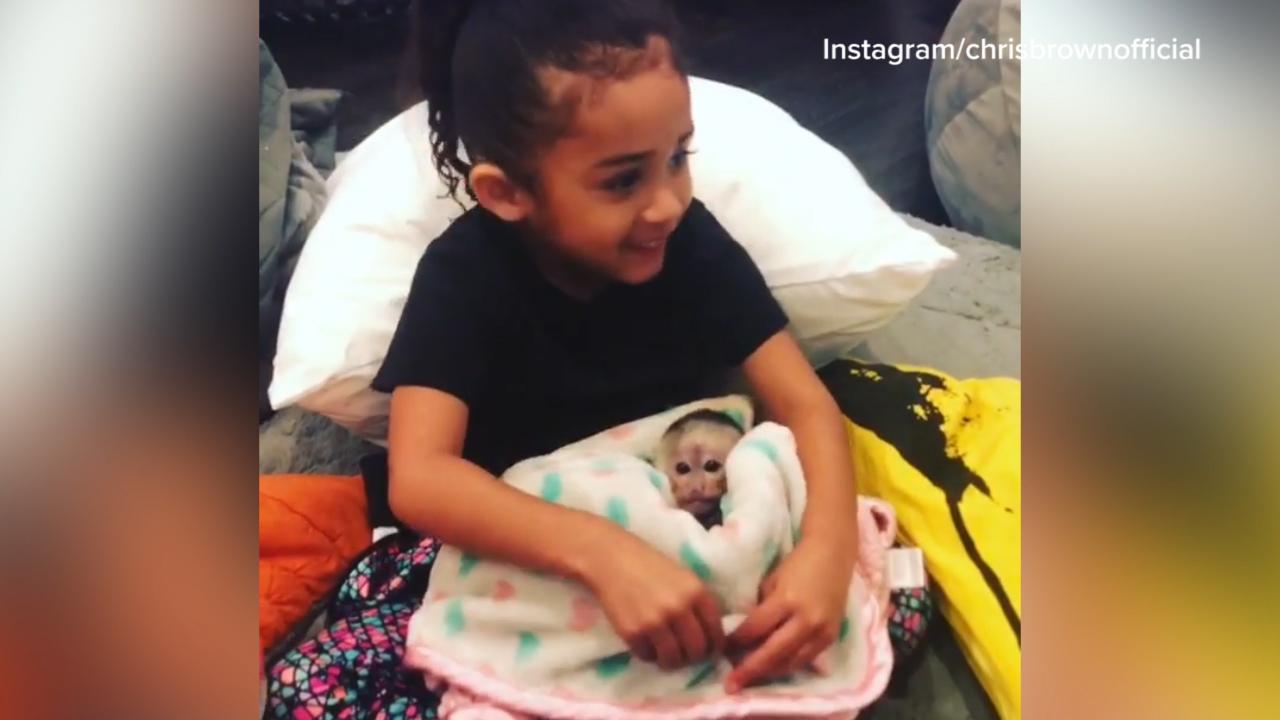 Chris Brown gifts three-year-old daughter pet monkey