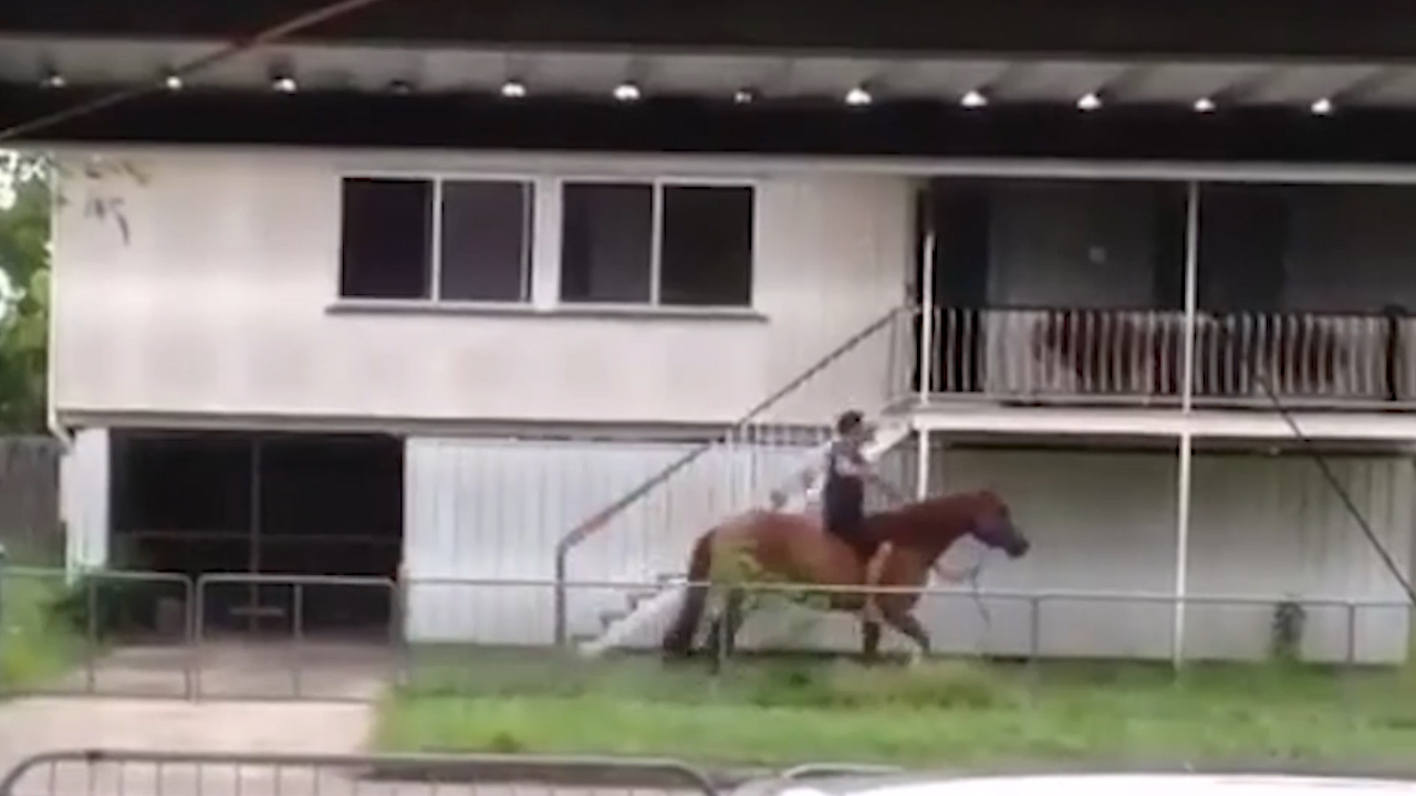 Man borrows neighbour's horse for joyride