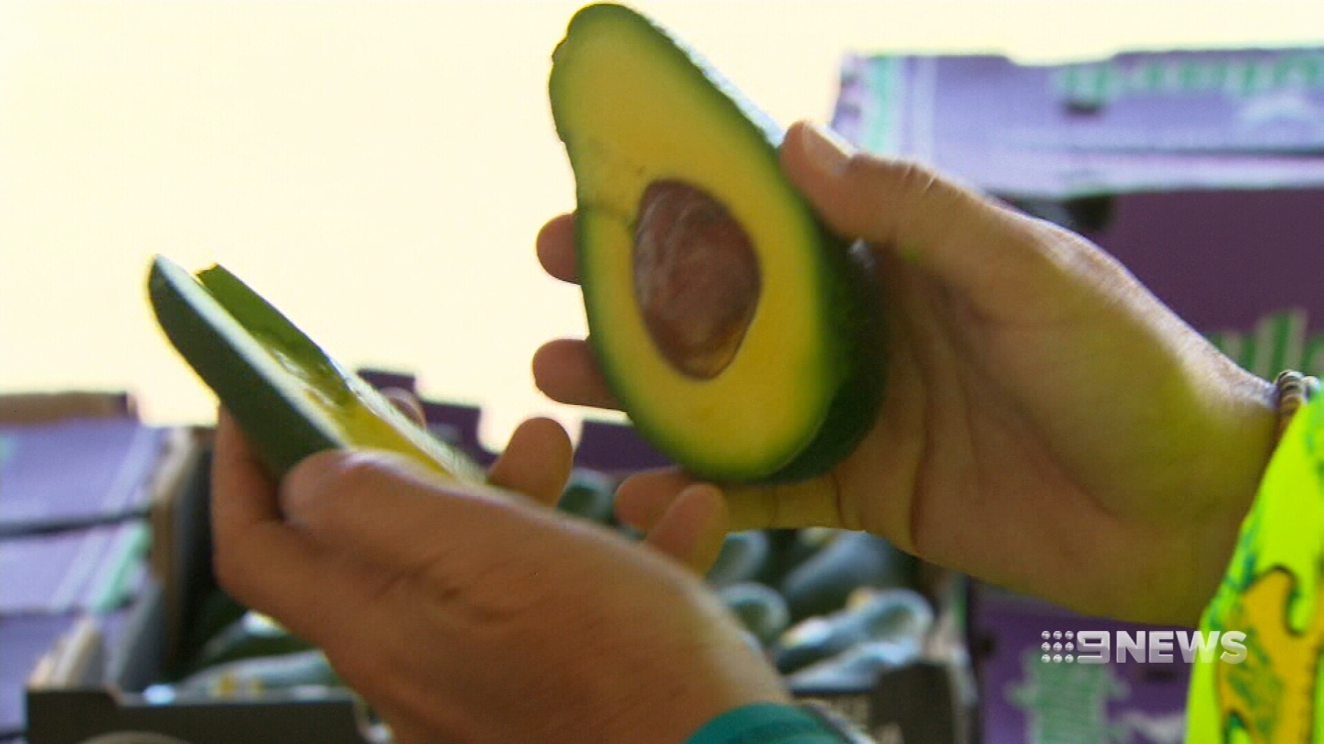 Avocado prices continue to skyrocket