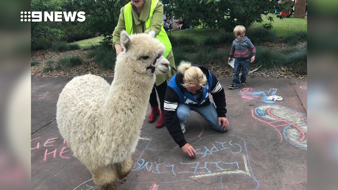Victorian town shattered by Harold the Alpaca's death