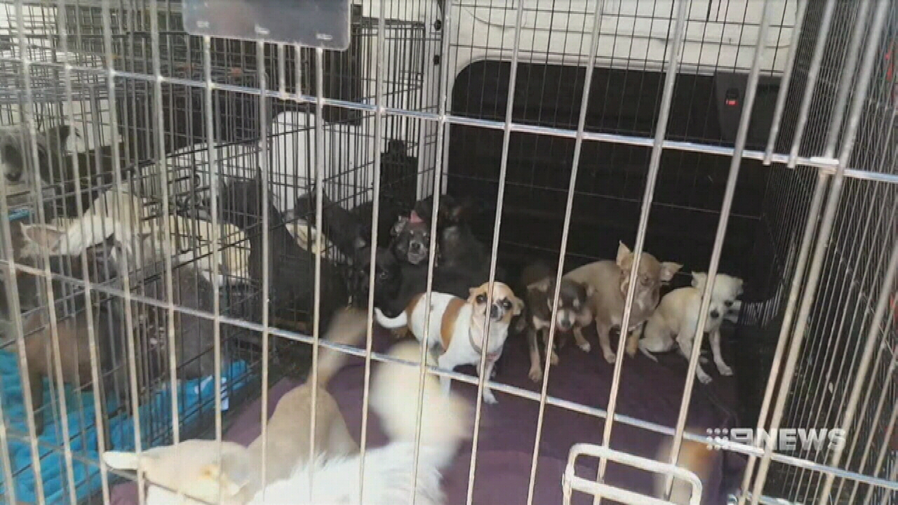 'Designer pets' seized in puppy farm raid